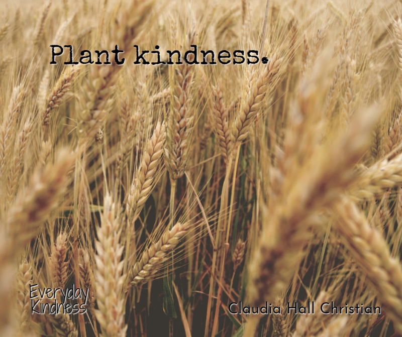 Plantkindness (1)