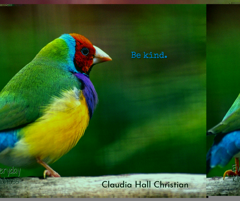 Bird-kindness