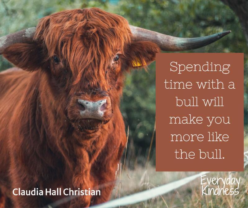 2020_11_bull